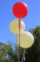 Wedding Balloons Perth | Ivory Red 3 Foot Helium Latex Balloons